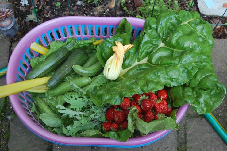 first vegetable harvest of spring