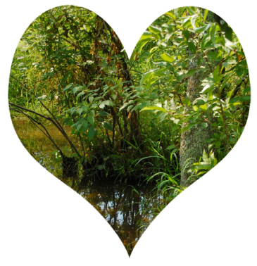 image: green heart of the swamp forest