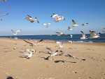 The Non-Plussed Seagull Dancers