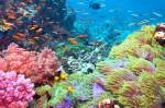 colors-coral-reef