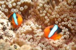 great-barrier-reef-440x298